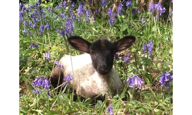 Our animals live in a beautiful rural environment - please see website for details