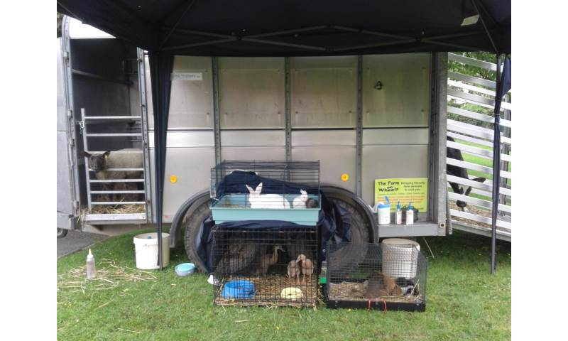 Meeting lambs, rabbit doe with baby kits, ducks, hen with chicks and a calf from The Farm On Wheels.