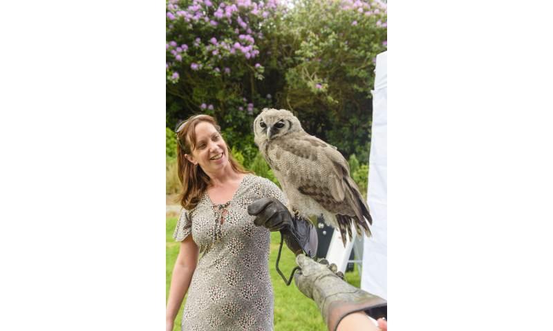 Handle Birds of Prey