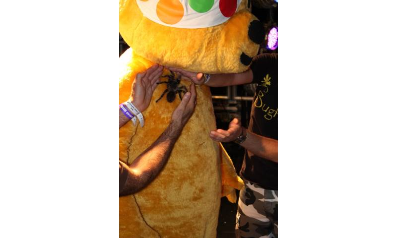 Pudsey Bear being brave with Bugfest - Wild and Deadly Show.