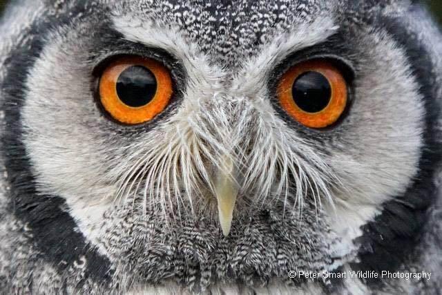 pidge eyes.jpg