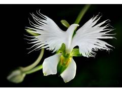 Bella Fleur Floristry Logo