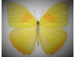 Yellow Butterfly Cakes & Sugarcraft Logo